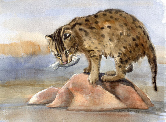 paintings of wild cats for sale watercolors by mimi