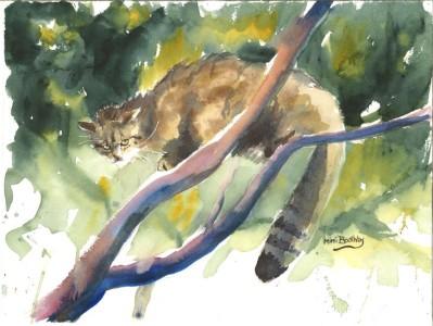 Wildcat_intree
