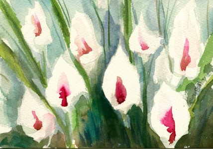 White callas for my love watercolors by mimi torchia boothby for Calla lily flower meaning