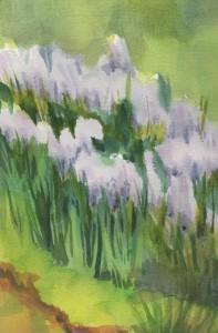 bluehyacinths