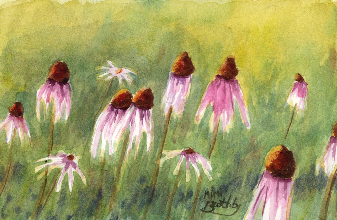 Cone Flowers Echinacea Purpurea Watercolors By Mimi Torchia Boothby